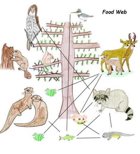easy food web to draw drawing food webs with own animal