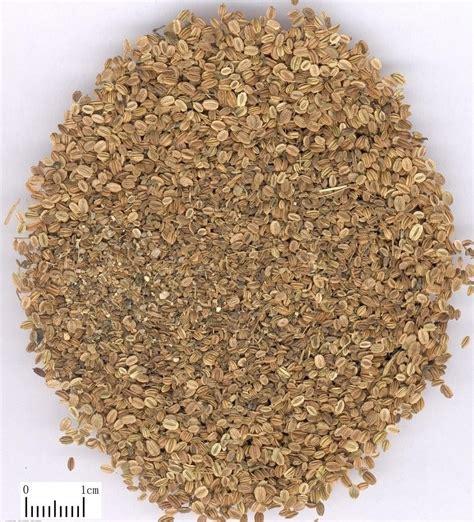wholesale seed wholesale cnidium seed powder extract osthole 80 cas cas