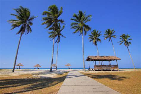 images beach sea coast tree sand ocean