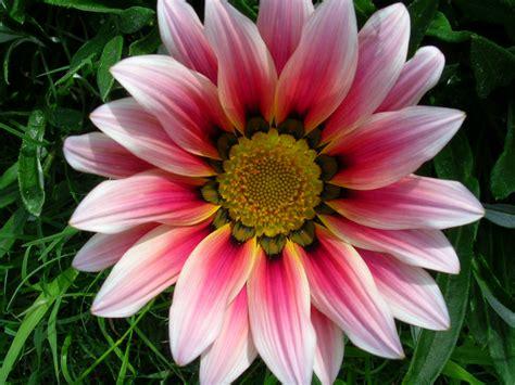 Imagenes De Flores Naturales Con Sus Nombres | fotos de flores con sus nombres imagui