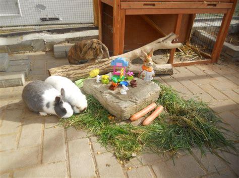 spielzeug fuer kaninchen selber machen haus design ideen