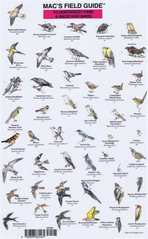 backyard birds pacific northwest northwest park backyard birds mac s field guide waggoner cruising guide