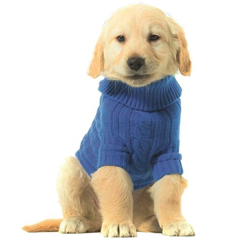 imagenes de invierno con animales vestir a los perros