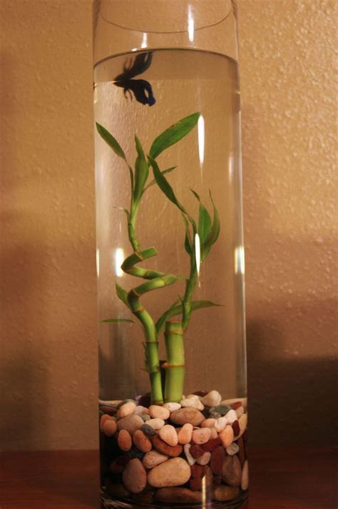 betta vase blue betta tank aquatic gardeners and fish tanks