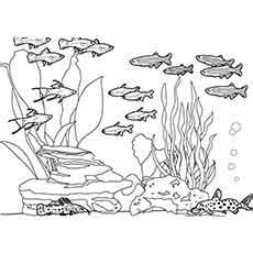ocean habitat coloring pages free coloring pages ideas