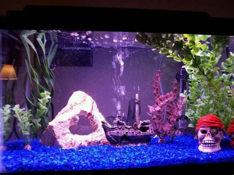 home aquarium decorations 17 best images about home aquarium design on pinterest aquarium decorations cool fish and