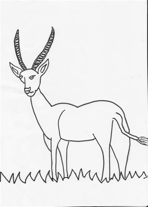 herbivorous animals coloring page antelope coloring page