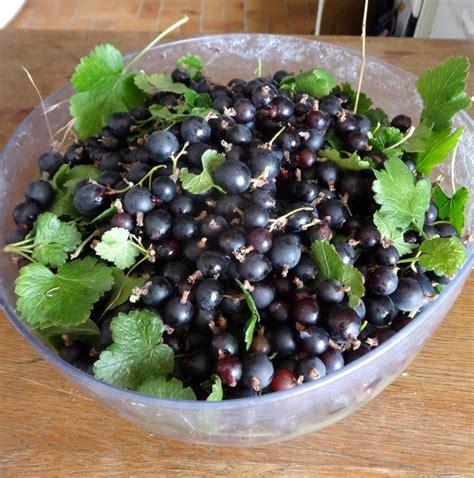 heavenly gooseberry   blackcurrant jam combination