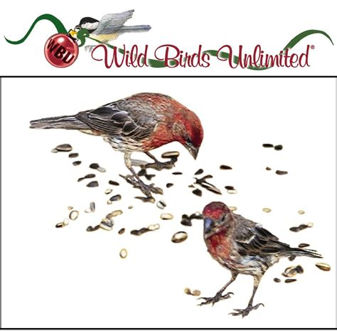 bird in the house good luck wild birds unlimited feed the birds for new year good luck