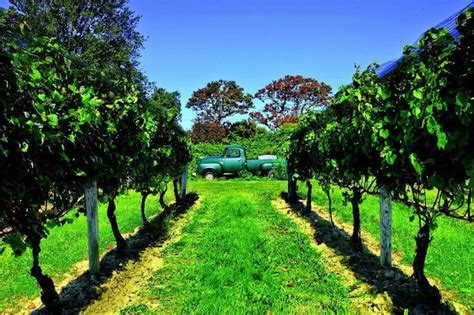 sherwood house vineyard home vineyards might need less acreage than you think the spin
