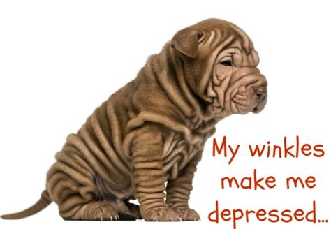depression in dogs depression in dogs use remedies to treat depressed dogs