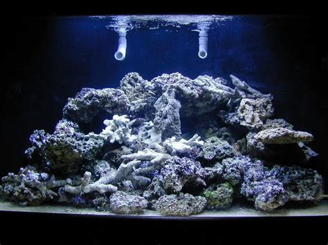 aquascape live rock simple and effective guide on reef aquascaping reef