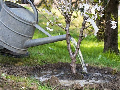 Kleine B Ume F R Garten 3325 by Kleine B 228 Ume F 252 R Den Garten B Ume F R Den Garten Tipps