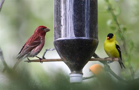 homemade finch bird feeders birdcage design ideas