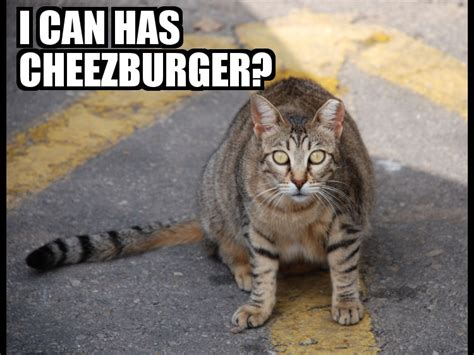 I Can Has Cheezburger Meme - i can has cheezburger memes