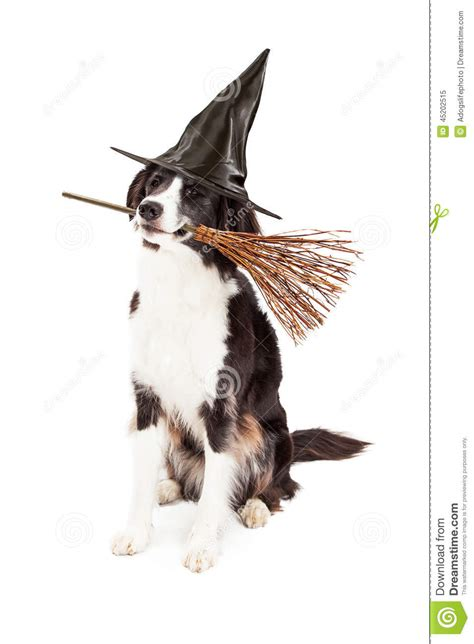 halloween stock photo image