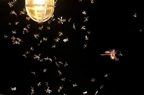 Led Outdoor Lights And Bugs Bugs And Led Lighting Nexgen Energy