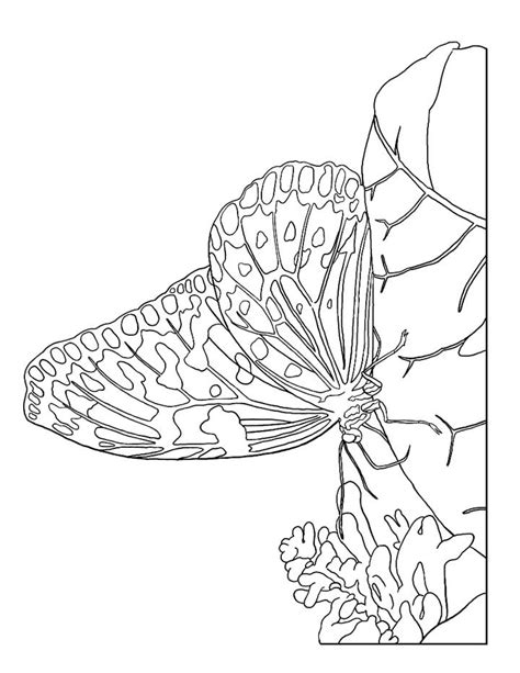 free coloring pages of detailed butterflies