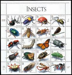 Mosquito Backyard Control Florida Insect Identification Guide Search Results