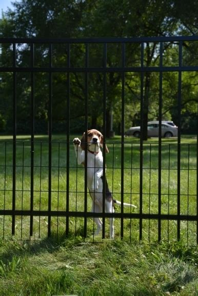 how to keep dog in yard without fence how to keep dog in yard without fence fence ideas
