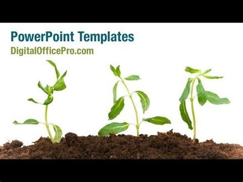 plant safety powerpoint templates plant safety ppt growing plant powerpoint template backgrounds
