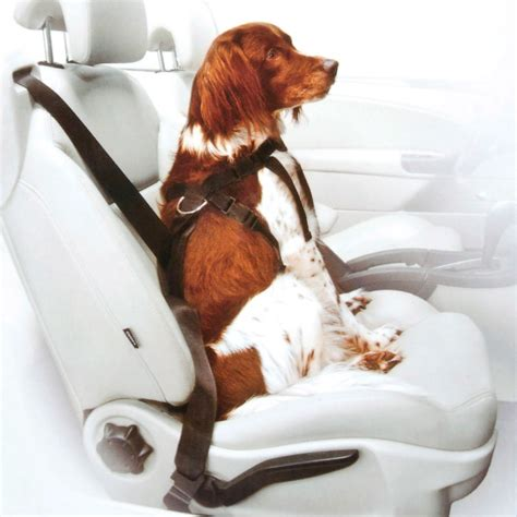 Hundegurt Auto by Hundegeschirr Hundeleine Hundegurt F 252 Rs Auto Spiel Hobby