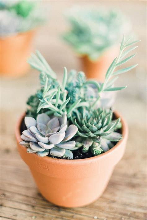 succulent arrangements succulent arrangements fresh air pinterest