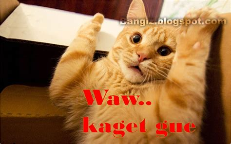 wallpaper gambar kucing dengan kata kata bangiz car interior design