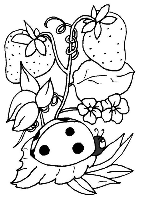 printable coloring pages ladybugs free printable ladybug coloring pages for