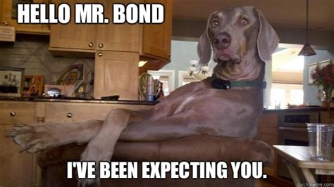 Fancy Dog Meme - hello mr bond i ve been expecting you fancy dog