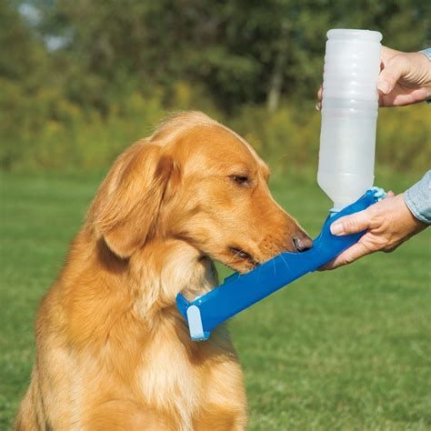 how to get puppy to drink water handi drink water bottle 187 gadget flow