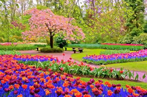 beautiful pictures of spring spring season google search spring season pinterest