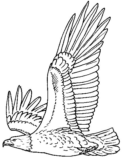 Rules Of The Jungle Printable Pictures Of Bald Eagle Bald Eagle Coloring Pages