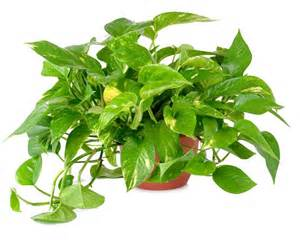 best house plants indoor plants best indoor plants