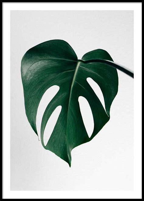 Poster Monstera monstera one poster