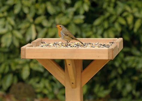 wildlife advice what to feed garden birds the english