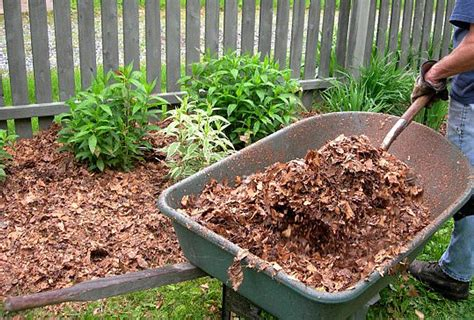 Organic Container Gardening - leaf mulch nature s bargain southern wild
