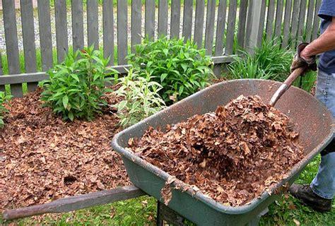 Leaf Mulch Nature's Bargain!   Southern Wild