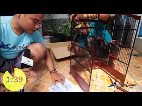 Kandang Sangkar Jangkrik Bulat membuat sangkar burung semi otomatis videomoviles