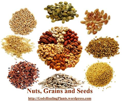 whole grains nutrients nutrient chart of nuts grains seeds god s healing plants