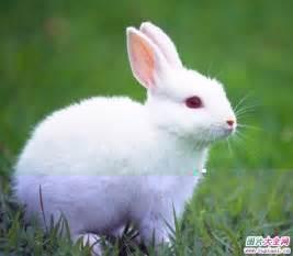 Giraffe Vase 可爱小兔子动漫图片 可爱小兔子图片大全 可爱小兔子卡通图片 可爱小兔子图片怎么画 可爱小兔子图片 可爱小兔子卡通 小龙文挡网
