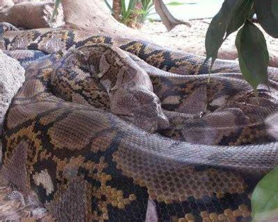 film berburu ular anaconda ular terbesar di dunia warkop aremania
