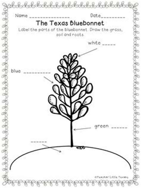 coloring page indian paintbrush label the bluebonnet worksheet texas our texas pinterest