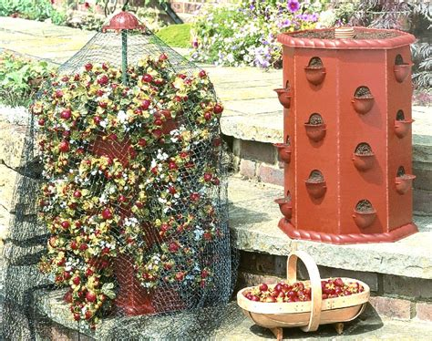 Strawberry Barrel Planter by Strawberry Barrel 163 17 99