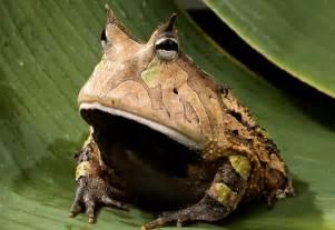 Download beautiful wild animals amazon rainforest frogs wallpaper