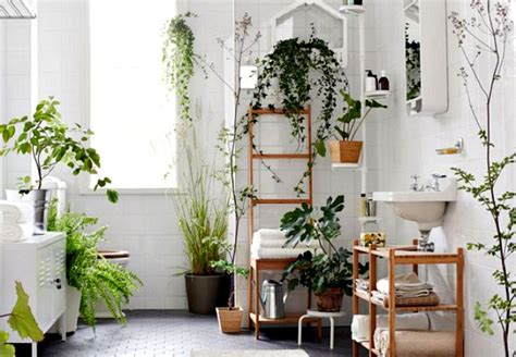 plants to keep in bathroom 12 creative ways to use plants in the bathroom