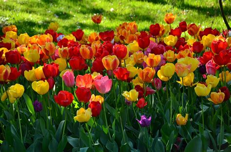 flores de jardin flores para jardins op 199 213 es