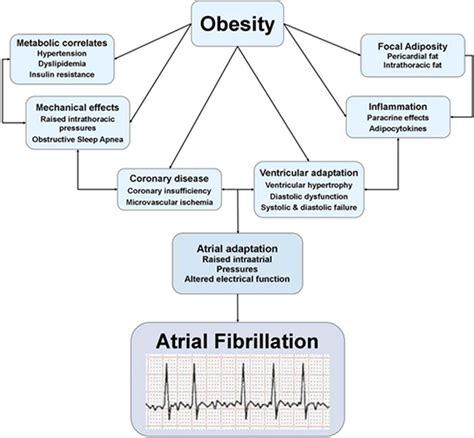 atrial fibrillation diagram obesity begets atrial fibrillation circulation