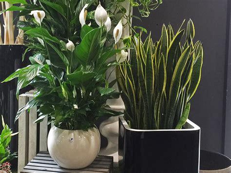 piante verdi da interno piante verdi e piante fiorite fiorito