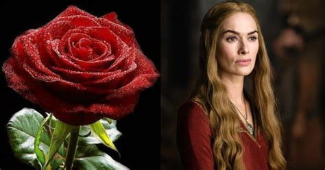 of thrones a flower every character floraqueen
